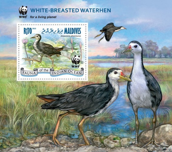 [WWF - Birds - White-Breasted Waterhen, Typ ]