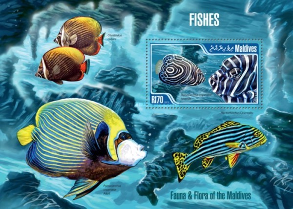 [Marine Life - Fishes, Typ ]