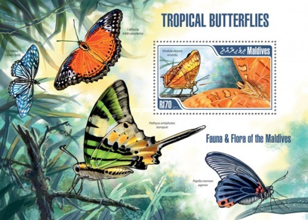 [Insects - Tropical Butterflies, Typ ]