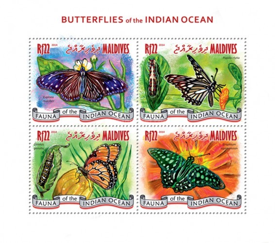 [Insects - Butterflies of the Indian Ocean, type ]