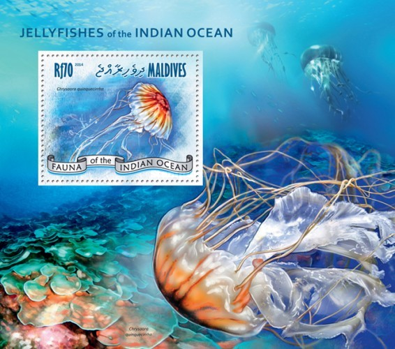 [Marine Life - Jellyfishes of the Indian Ocean, type ]