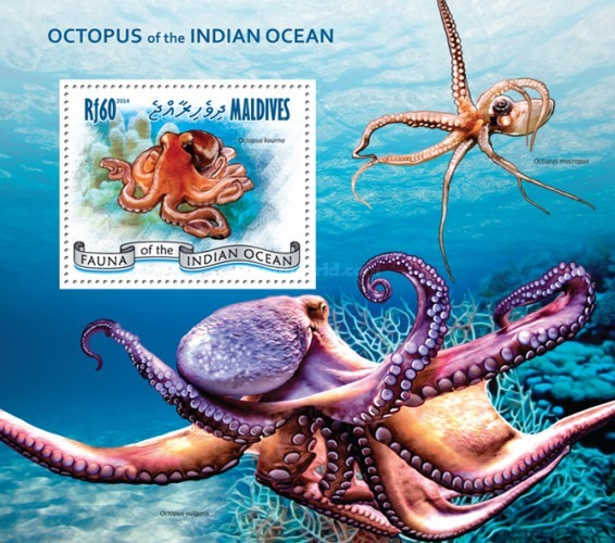 [Marine Life - Octopus of the Indian Ocean, Typ ]