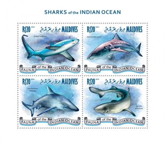 [Marine Life - Sharks of the Indian Ocean, Typ ]