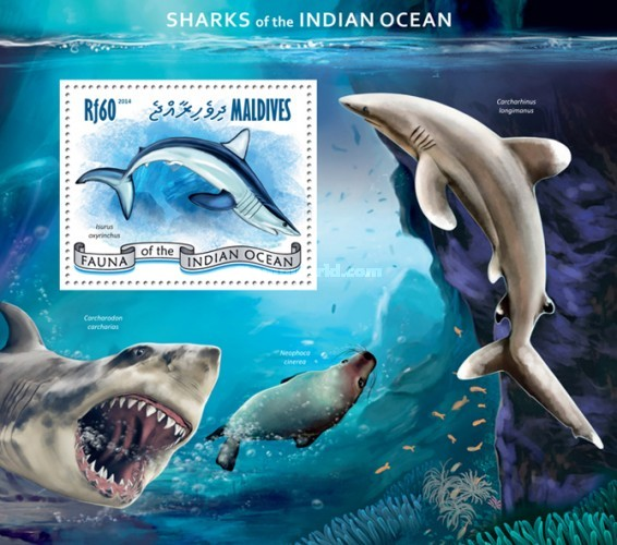 [Marine Life - Sharks of the Indian Ocean, type ]
