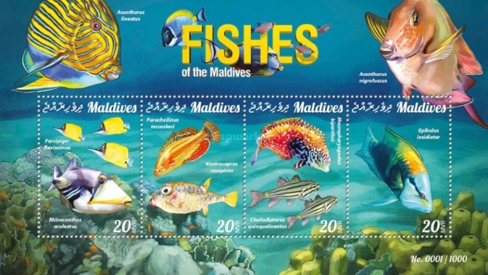 [Marine Life - Fishes of the Maldives, Typ ]