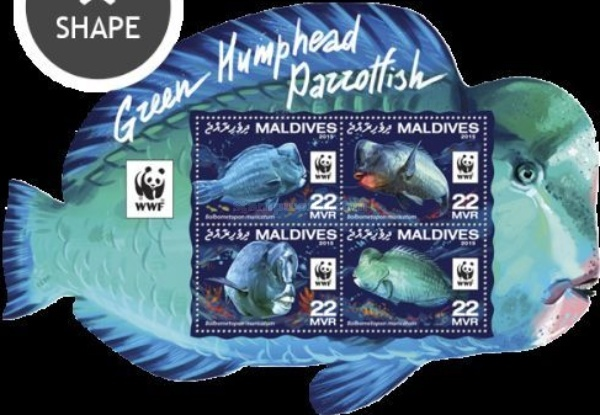 [WWF - Green Humphead Parrotfish, Typ ]