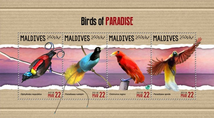 [Birds of Paradise, Typ ]