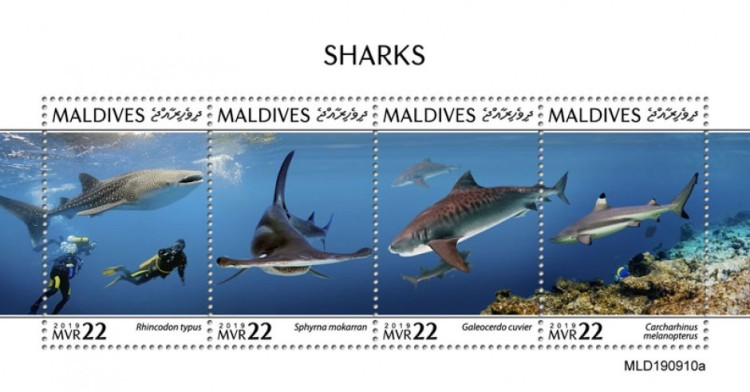 [Marine Life - Sharks, type ]