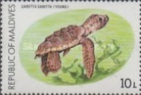 [Turtle Conservation Campaign, Typ AFN]