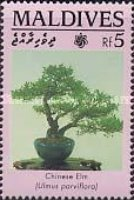 [Bonsai Trees and Shrubs, Typ BFD]