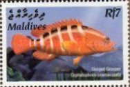 [Tropical Fish, type FCX]