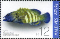 [Tropical Fish, type FXC]