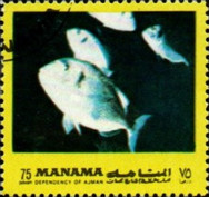 [Fish of the Mediterranean, type ACY]