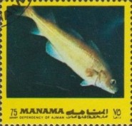 [Fish of the Mediterranean, type ACZ]