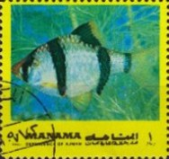 [Fish of the Mediterranean, type ADA]