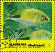 [Fish of the Mediterranean, type ADE]