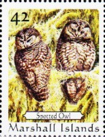 [Birds - Owls, Typ CMC]