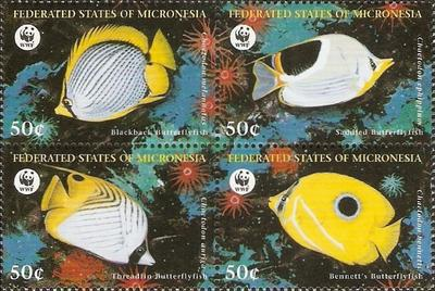 [Butterflyfishes, Typ ]