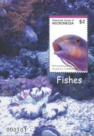 [Fish of Micronesia, Typ ]