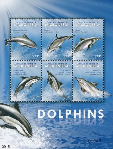[Dolphins, type ]