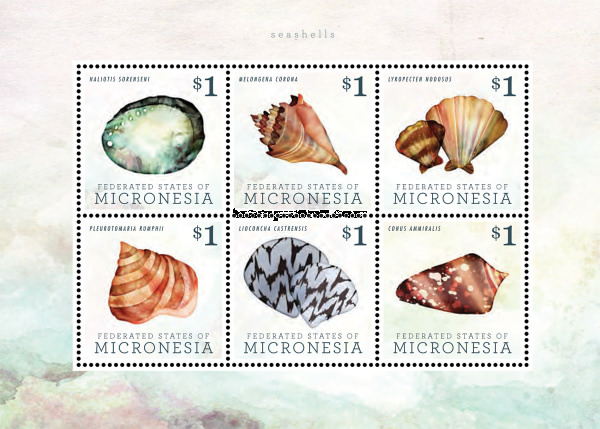 [Seashells, type ]