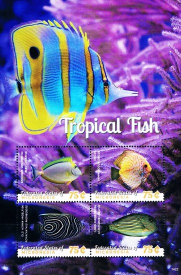 [Marine Life - Tropical Fish, type ]