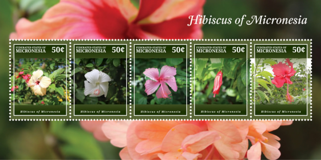 [Flora - Hibiscus of Micronesia, Typ ]