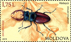 [Fauna of Moldova, type AMX]