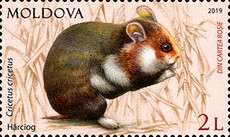 [Fauna of Moldova, type AMY]