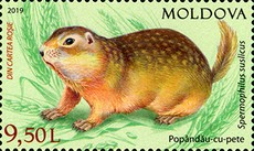 [Fauna of Moldova, type AMZ]