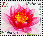 [Flora - Water Lilies, Typ AND]