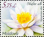[Flora - Water Lilies, Typ ANE]