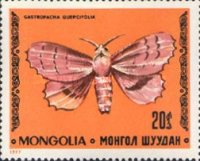 [Butterflies, type AND]