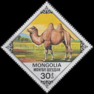[Bactrian Camels, type AQM]