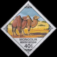 [Bactrian Camels, type AQN]