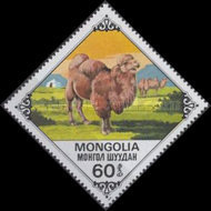 [Bactrian Camels, type AQP]