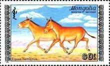 [Mongolian Wild Ass, type BRC]