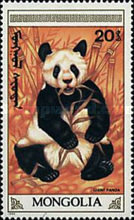 [The Giant Panda, type BXG]