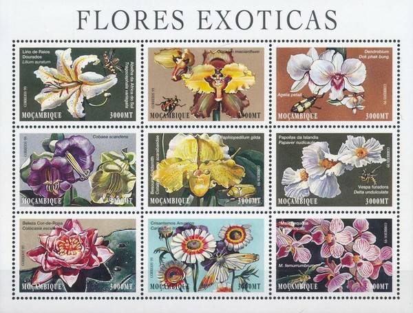 [Exotic Flowers, Typ ]