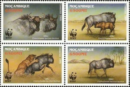 [Endangered Species - Blue Wildebeest, Typ ]