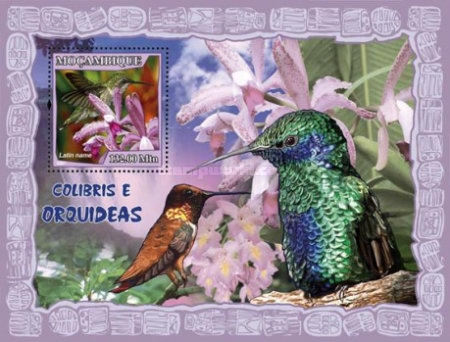 [Fauna - Humming Birds & Orchids, Typ ]