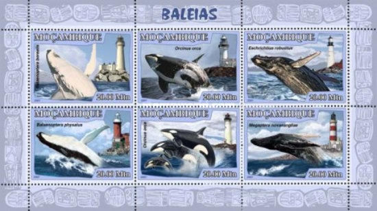 [Fauna - Whales & Lighthouses, Typ ]