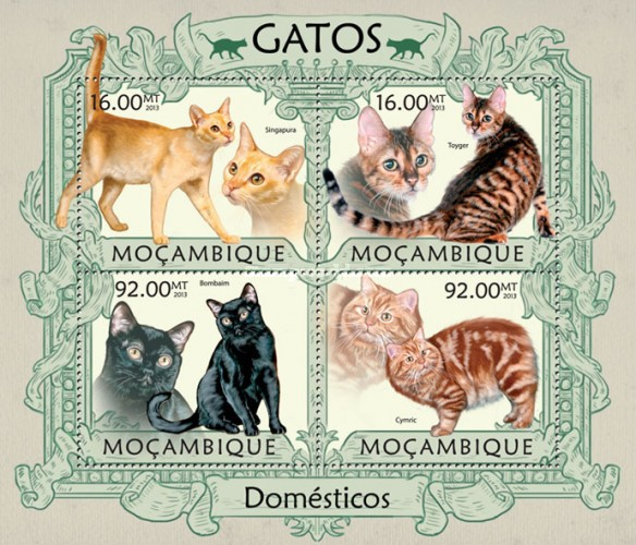 [Domestic Animals - Cats, Typ ]