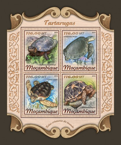 [Fauna - Turtles, Typ ]