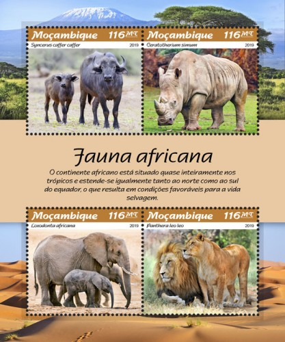[African Fauna, Typ ]