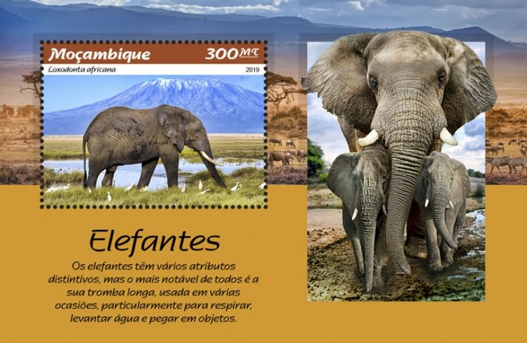 [Fauna - Elephants, type ]