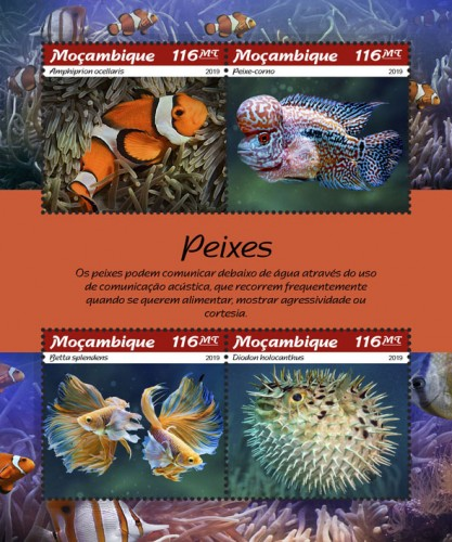 [Marine Life - Fishes, type ]
