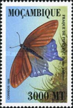 [Butterflies of the World, Typ AVG]
