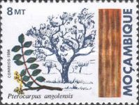 [Indigenous Trees, Typ WR]