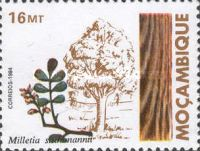 [Indigenous Trees, Typ WS]